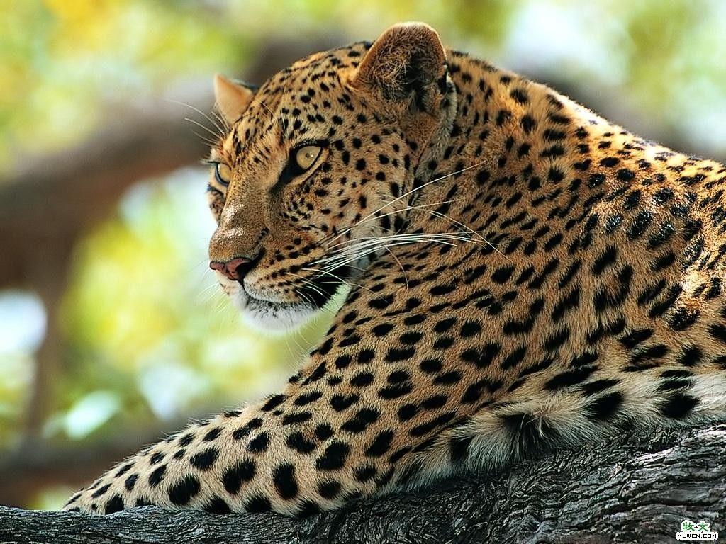 leopard paint